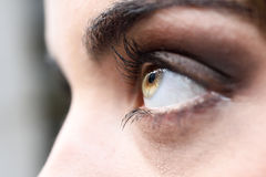 Woman eye with long eyelashes Royalty Free Stock Photography