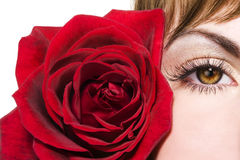 Woman eye and red rose royalty free stock photos