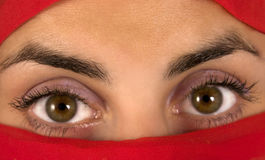 Woman eyes. Brown woman eyes - wide open royalty free stock photo