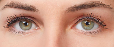 Woman eyes. Young beautiful woman face close up eyes looking camera Stock Photos