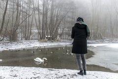 Woman Fütterungsseeschwäne Enten Vogelzufuhrwinter Lizenzfreies Stockfoto