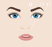 Woman face and eyebrow scheme mapping. Trimming. Vector illust Stock Photography