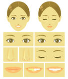 Woman face parts Stock Photos