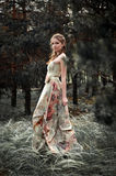 Woman in fairy forest. Portrait of romantic woman in fairy forest royalty free stock photo