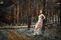 Woman in fairy forest Stock Image