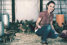 Woman farmer feeding chickens inside of coop Royalty Free Stock Image