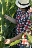Woman farmer in a field with corn Royalty Free Stock Photos