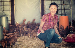 Woman farmer giving feeding stuff to chickens Royalty Free Stock Photo