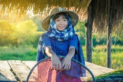 Woman farmer is harvesting rice in Thailand. Royalty Free Stock Photos