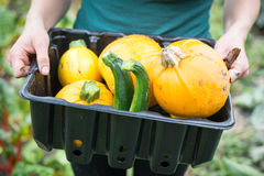 Woman Farmer Holding Black Tray of Squash and Courgettes Royalty Free Stock Image