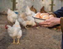 Woman farmer holding fresh organic eggs. Hens on the background stock photos