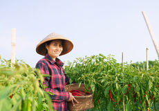 Woman farmer royalty free stock image