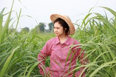 Woman farmer standing akimbo in the sugarcane farm and wearing a straw hat. With red long-sleeved shirt stock photography