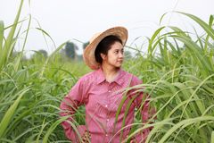 Woman farmer standing akimbo in the sugarcane farm and wearing a straw hat. With red long-sleeved shirt royalty free stock photography