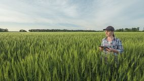 Woman farmer with tablet in hand stands in a green field of wheat royalty free stock photos