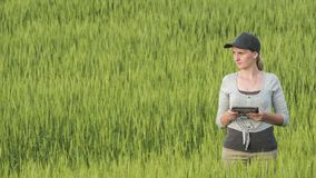 Woman farmer with tablet in hand stands on green wheat field stock photos
