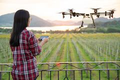 Free Woman Farmer Use Smart Phone Control Agriculture Drone Fly To Sprayed Fertilizer On The Grape Fields, Smart Farm 4.0 Concept Royalty Free Stock Photo - 139966775