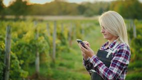 A woman farmer uses a smartphone on the background of his vineyard. Small business owner. Side view. A woman farmer uses a smartphone on the background of his royalty free stock images