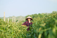 Woman farmer Royalty Free Stock Image