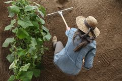 Woman farmer working with rake in vegetable garden, raking the s stock images