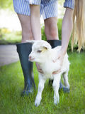 Woman farmer and young goat Royalty Free Stock Image