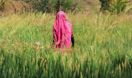 Woman Farming. In a green field in Asia Royalty Free Stock Image