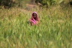 Woman Farming. NIMAJ BAGH, INDIA, FEBRUARY 28: An unidentified woman farming outside the village of Nimaj Bagh, Rajasthan, Northern India on FEBRUARY 28, 2012 Royalty Free Stock Photos