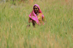 Woman Farming. NIMAJ BAGH, INDIA, FEBRUARY 28: An unidentified woman farming outside the village of Nimaj Bagh, Rajasthan, Northern India on FEBRUARY 28, 2012 Stock Photography