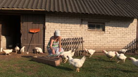Woman feed poultry broiler chicken in farm stall outdoor stock video