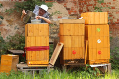 Woman feeding bees with sweet juice Stock Photography