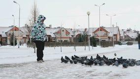 Woman feeding big flock of pigeons in park. VELIKIY NOVGOROD, RUSSIA - JANUARY 14, 2017: Woman feeding big flock of pigeons in a city park on a cold winter day stock footage