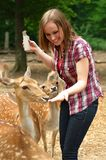 Woman feeding deer in a park Royalty Free Stock Images