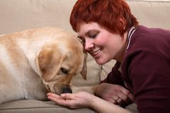 Woman feeding dog. A matured caucasian woman feeding  her young Labrador dog on the sofa Stock Photography