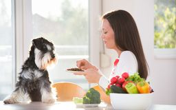 Woman feeding dog at kitchen table. Pretty woman with apron feeding miniature schnauzer with granules at table. Spoiled dog eating dry food Stock Photo