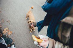 Woman feeding a dog. In the street Stock Images