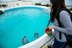 Woman feeding dolphin Stock Photo