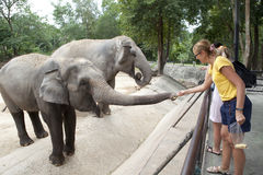 Woman feeding the elephant Royalty Free Stock Image