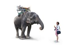 Woman feeding the elephant bananas Stock Photography