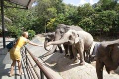 Woman feeding elephant Royalty Free Stock Image
