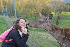 Woman feeding European Roe Deer, Capreolus capreolus Stock Photos