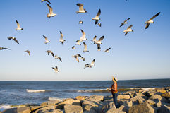 Woman feeding a gaggle of seagulls. With the ocean as the background Stock Images