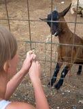 Woman feeding goat. Stock Images