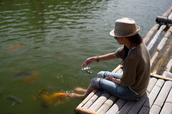 Woman feeding goldfish from bamboo dock Stock Photography