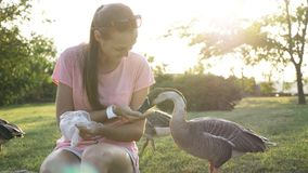 Woman feeding goose from palm. Young smiling woman feeding wild goose from palm. Girl with wild geese Royalty Free Stock Image