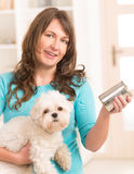 Woman feeding her dog. Woman owner of small doggy maltese with can of dog food Royalty Free Stock Photo