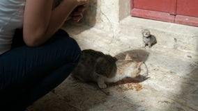Woman is feeding a hungry cat with a small kitten on the street. Person squatting near a homeless animal in need of protection and care. In the background a stock footage