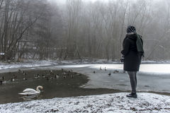 Woman feeding lake swans ducks Bird feed winter 3. A young woman feeding on a lake swans and ducks Bird feeding in winter 3 royalty free stock images