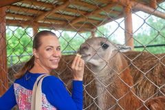 Woman feeding lama Stock Photography