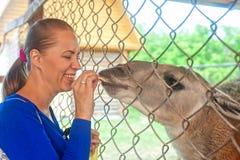 Woman feeding lama Royalty Free Stock Photos