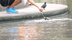 Woman feeding little turtles stock footage